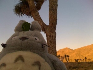 Totoro having a blast at Joshua Tree